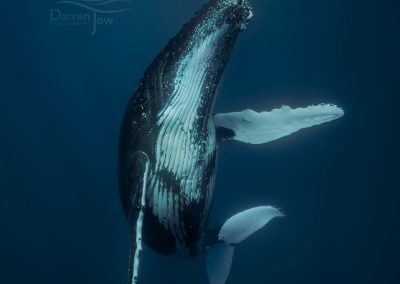 Humpbacks_DJ_005