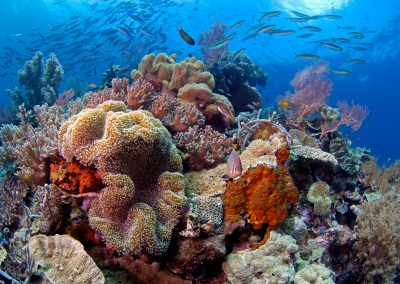 Mark-Snyder---Wakatobi-Reef