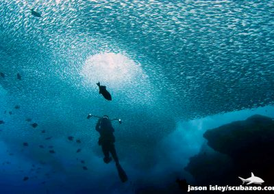 sardines_002