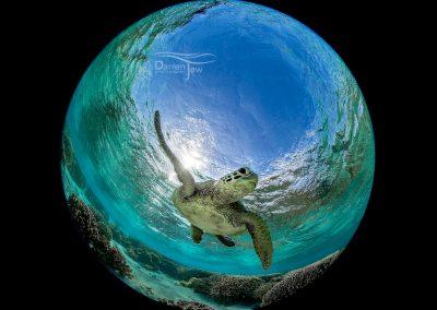 turtle_dj_001