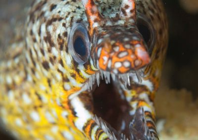 DragonMoray---Glen-Cowans-copy
