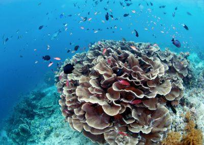 Underwater-Tour.-SIPADAN-ISLAND-Tourism-Malaysia