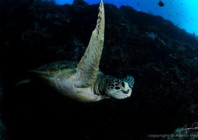 Underwater-Tour.--(c)-Aaron-Wong.--Tourism-Malaysia-(2)