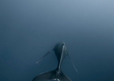 Humpbacks_DJ_003