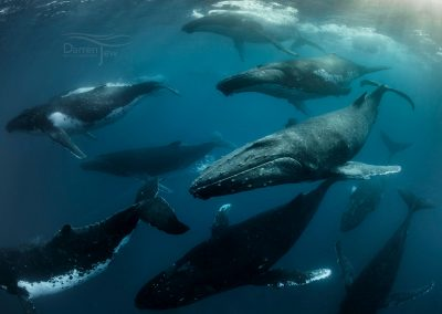 Humpbacks_DJ_004