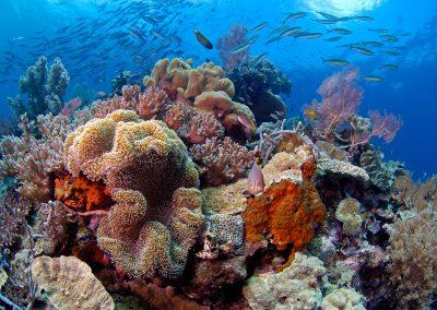 Mark-Snyder---Wakatobi-Reef