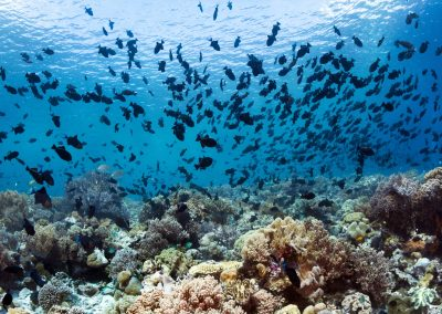 Walt-Stearns---Wakatobi-house-reef