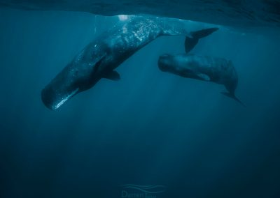 Whales_DJ_001