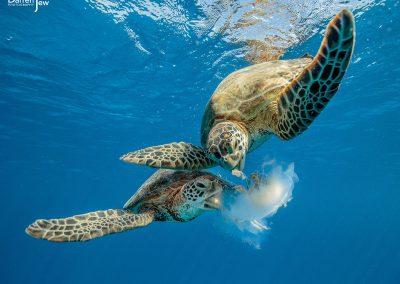 turtle_dj_002