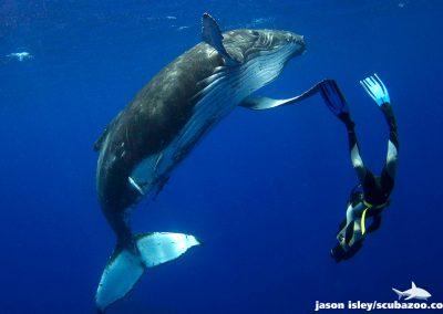 whale-humpback_001