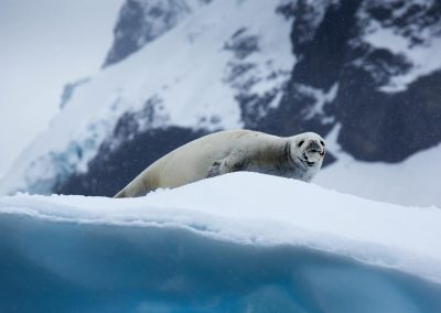 Greg Crow Antarctica 2524