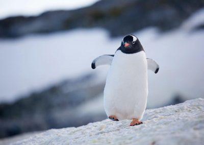 Greg Crow Antarctica 2819